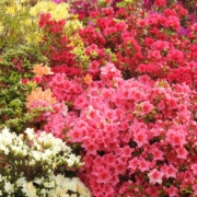 Gardens bursting with colour